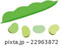 野菜 そら豆 ベクターのイラスト 22963872