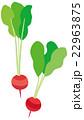 野菜 ラディッシュ ベクターのイラスト 22963875