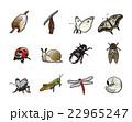 12か月の昆虫 22965247