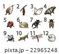 12か月の昆虫と数字 22965248