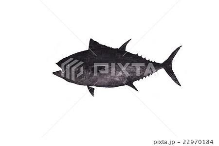 マグロ 魚拓 魚 白バック 墨 大物 天然  22970184