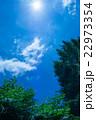木 陽射し 空の写真 22973354