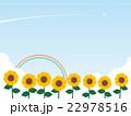 ひまわり畑と空 22978516