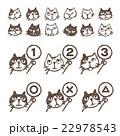 いろいろ猫、顔、順位、まるバツイラスト 22978543