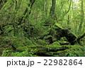 もののけの森 22982864