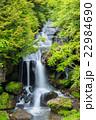 日光 新緑の竜頭の滝 22984690