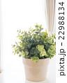 緑の植物(フェイクグリーン) 22988134
