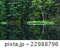 御射鹿池 新緑 池の写真 22988796