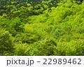 奥日光の新緑の山 22989462