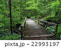 森 森林 渓流の写真 22993197
