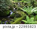 渓谷 渓流 川の写真 22993823