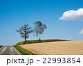 畑 松 美瑛町の写真 22993854