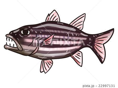 魚のイラスト ヤライイシモチ 22997131