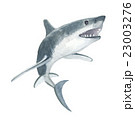 鮫 サメ 23003276