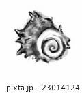 墨絵 挿絵 貝のイラスト 23014124