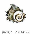 墨絵 挿絵 貝のイラスト 23014125