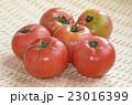 トマト ナス科 ナス属の写真 23016399