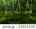 新緑の祇王寺 23022530