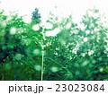 緑雨の景色 23023084