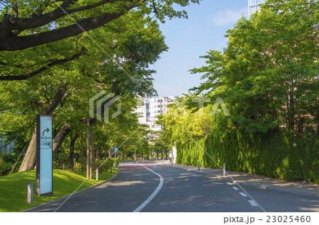赤坂サカスの西側を通るさくら坂(東京都港区) 23025460