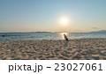 動物 ビーチ 浜辺の写真 23027061