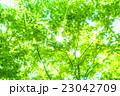 新緑エコイメージ 23042709
