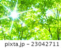 新緑 木漏れ日 5月の写真 23042711