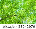 新緑 森林 森の写真 23042979