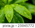 露 水滴 葉の写真 23045772