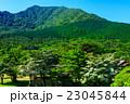 新緑の雲仙 田代原 ヤマボウシ 23045844