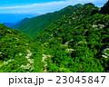 新緑の雲仙 ヤマボウシ 23045847