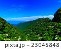 新緑の雲仙 ヤマボウシ 23045848