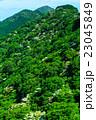 新緑の雲仙 ヤマボウシ 23045849