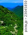 新緑の雲仙 ヤマボウシ 23045850