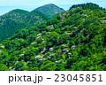 新緑の雲仙 ヤマボウシ 23045851