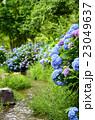 紫陽花 花 新緑の写真 23049637