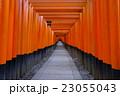 伏見稲荷大社 京都 伏見稲荷の写真 23055043