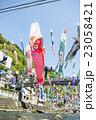 杖立温泉の鯉のぼり 23058421