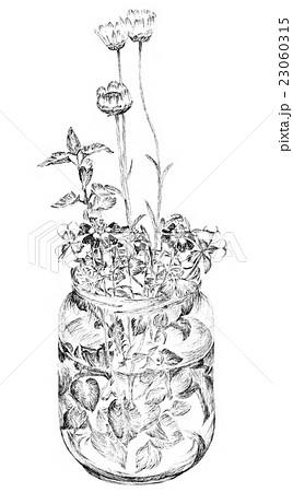 ビンに入った花のペン画イラストのイラスト素材 23060315 Pixta