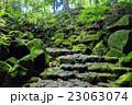 苔 石段 階段の写真 23063074
