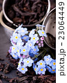 Blue flower in front of tea strainer on stone 23064449