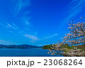 大村公園 桜 植物の写真 23068264