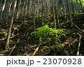 山林 杉林 森の写真 23070928