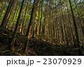山林 杉林 森の写真 23070929
