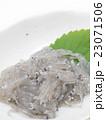 しらす 稚魚 生魚の写真 23071506