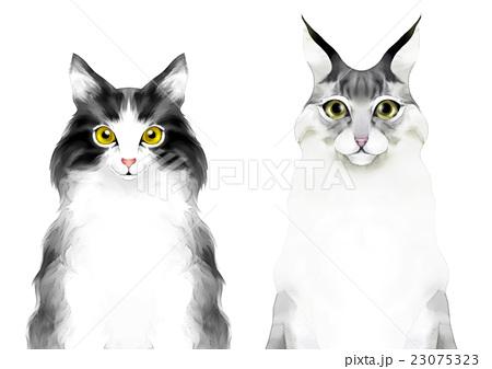 猫の顔 ノルウェージャンフォレストキャットとメインクーンの