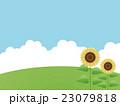 向日葵畑 23079818