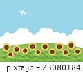 向日葵畑 23080184
