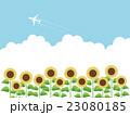 向日葵畑 23080185