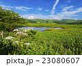 八島ヶ原湿原 23080607